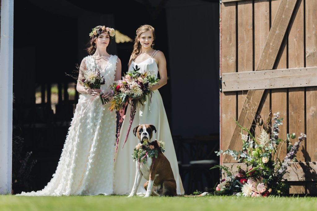 two brides with dog