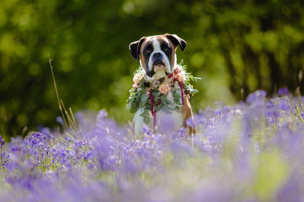 dog attendant for bohemian barn wedding